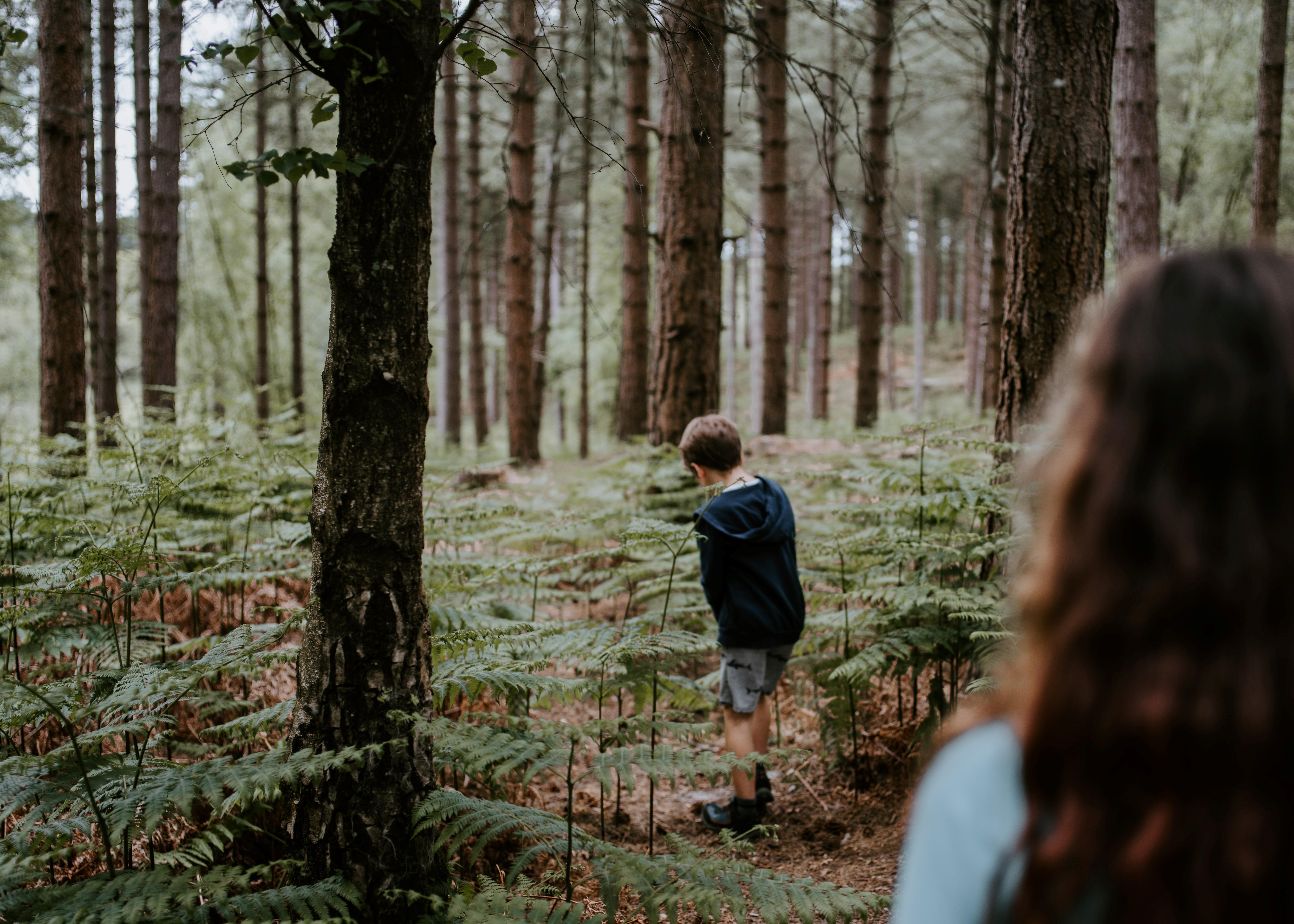 ForestValue BMEL fördert europäische Forschungskooperation im ...